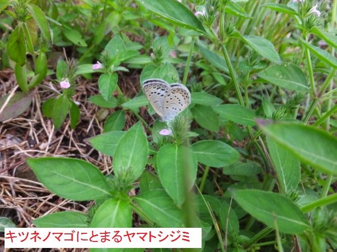 DSCF2627_1.jpg