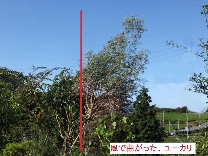DSCF2660_1.jpg