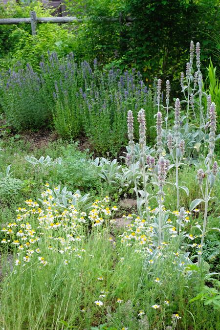 ハーブとグラス 夏の庭04