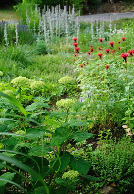 ハーブとグラス 夏の庭07