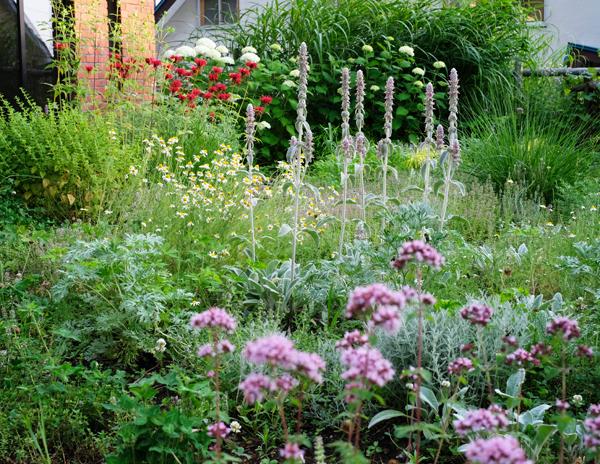 ハーブとグラス 夏の庭09