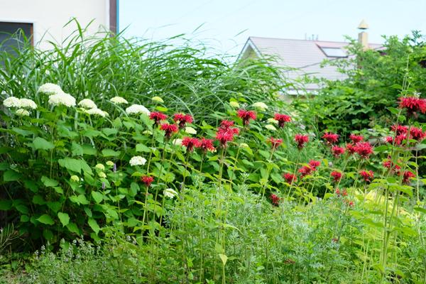 ハーブとグラス 夏の庭11