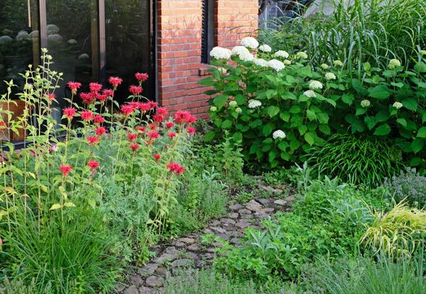 ハーブとグラス 夏の庭12