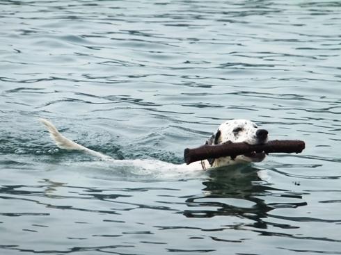 swimming hanna_07300041
