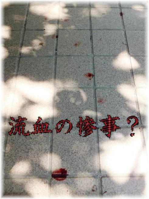blood_08260009.jpg