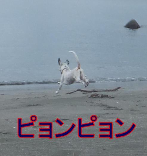 running_08260036.jpg