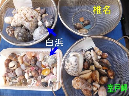 shells_09030001.jpg