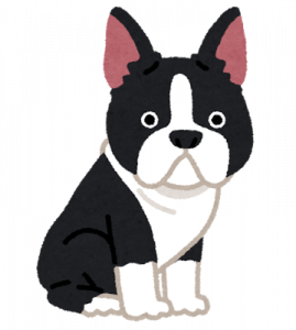 dog_boston_terrier.png