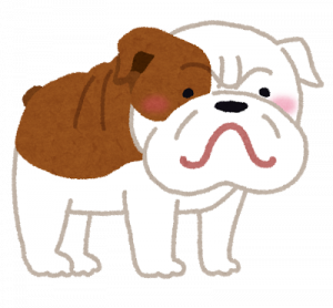 dog_bulldog.png