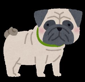 dog_pug.png