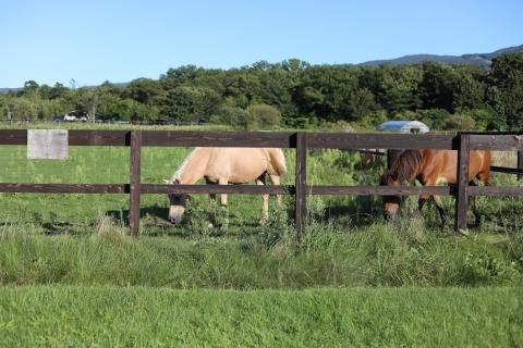 nagareyama_horses.jpg