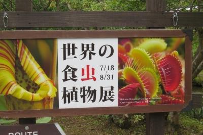 世界の食虫植物展a_1