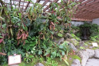 世界の食虫植物展b_1