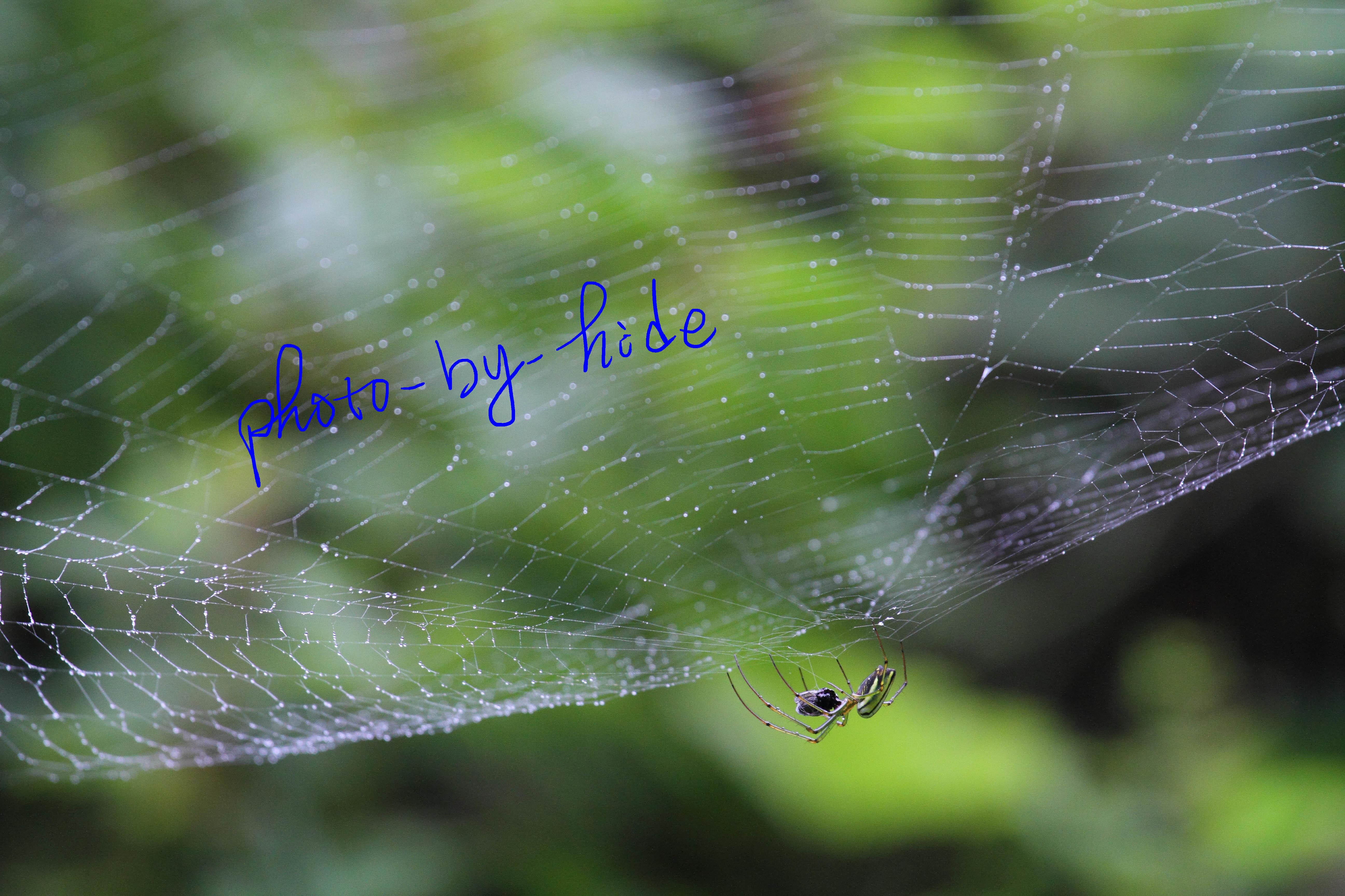 円原蜘蛛1