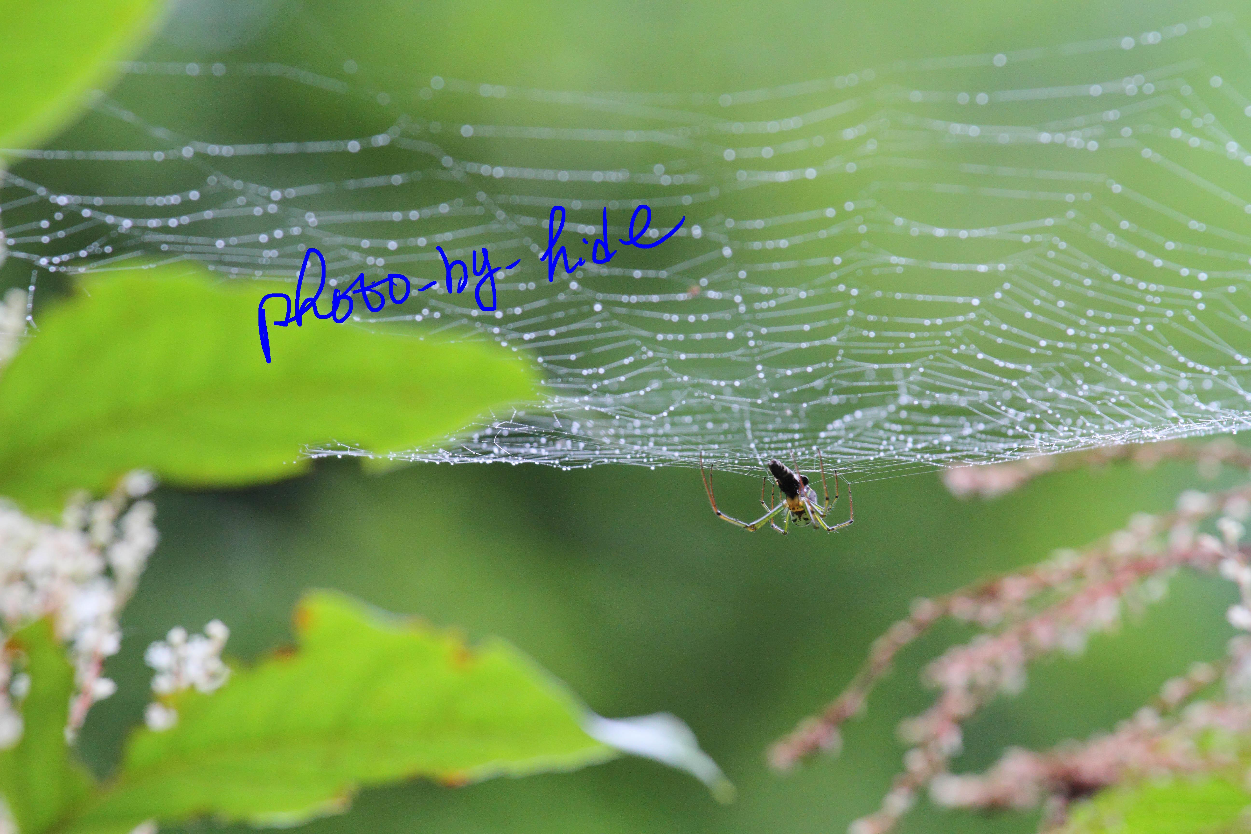 円原蜘蛛2