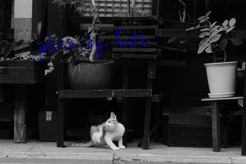京都散策1_edited-1