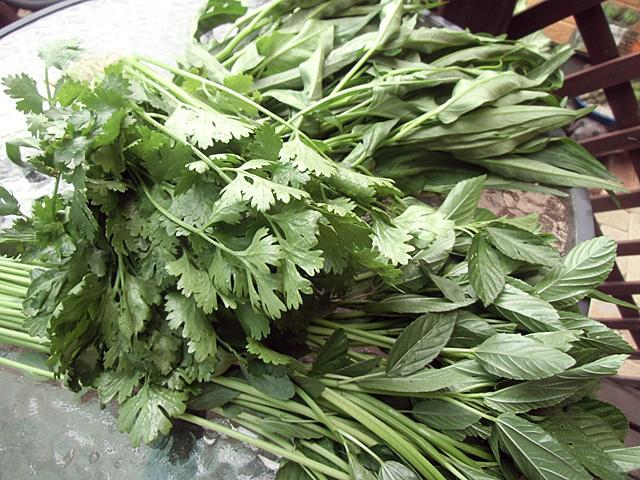 収穫の青菜