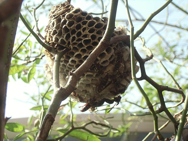 ハチの図全体像