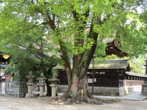 ふ藤森神社g