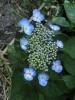 平成29年7月 お花