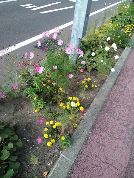 20170917用・秋の花と夏の花