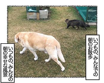 12072017_dog1mini.jpg