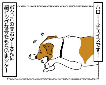 14092017_dog1.jpg