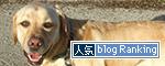 17092017_dogbanner.jpg