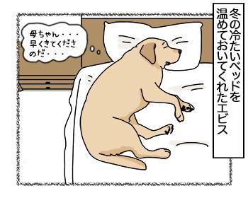 28082017_dog4.jpg