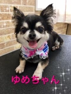 7月10日ゆめちゃん