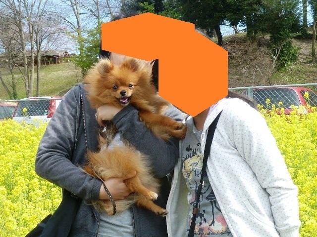 20150329ポン太市原園芸⑤