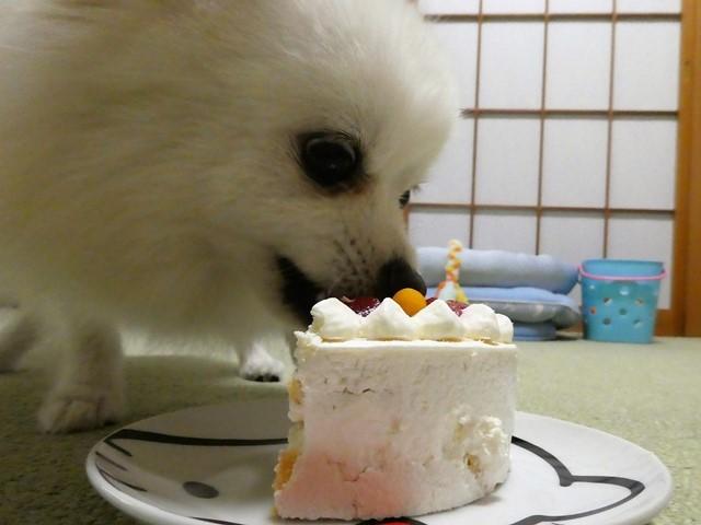 20170702ポンころ誕生ケーキ④