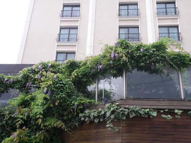 hotel1-2.jpg