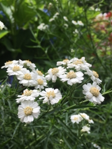 2017白い花