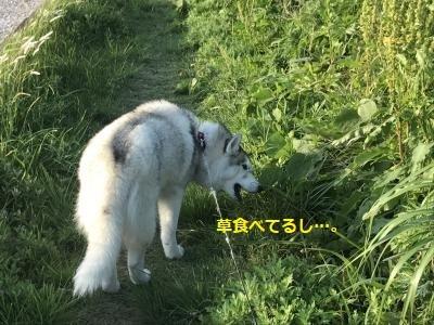 IMG_2623_convert_20170809141048.jpg