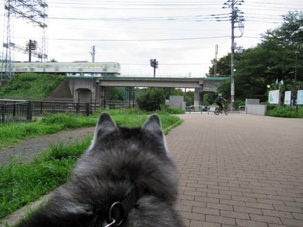 蒸し暑かった野川公園