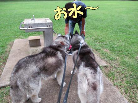 アッチッチ野川公園散歩