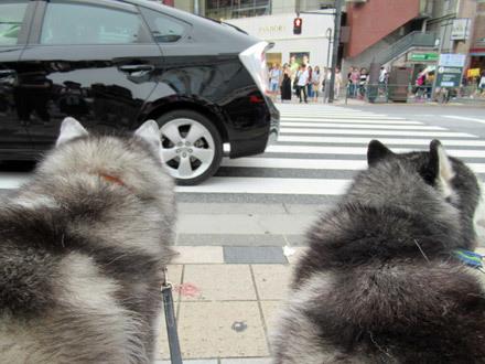 8月なのに表参道散歩