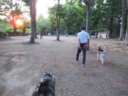 井の頭公園夕方散歩