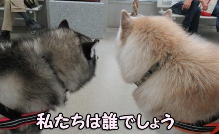 チョコちゃん&ピッコリーナちゃん