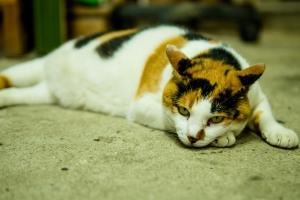 H29.7.31風鈴屋の猫➁