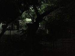 夜の乙女坂②
