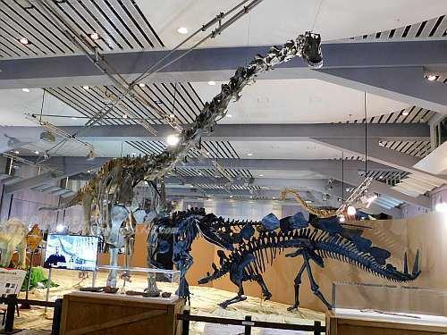 ディプロドクス、アロサウルス、ステゴサウルス