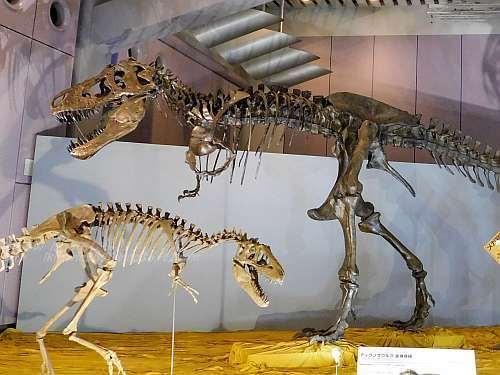 ティラノサウルスの骨格