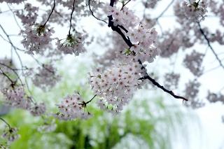 170408takasegawa(11).jpg