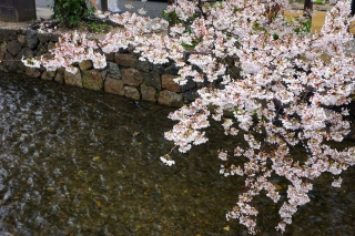 170408takasegawa(14).jpg