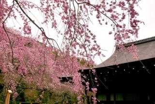 170405arashiyama (1)