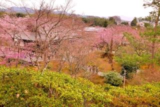 170405arashiyama (3)
