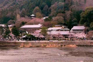 170405arashiyama (6)