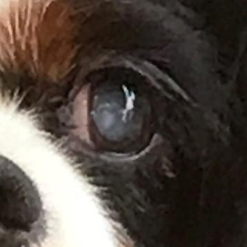 眼球が白いです。